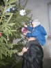 Mindenki karácsonyfája